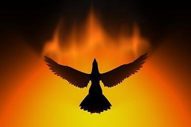 phoenixbirdphoto